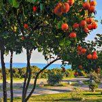 Spazi verdi Free Beach Residence