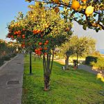 Vialetti Free Beach Residence